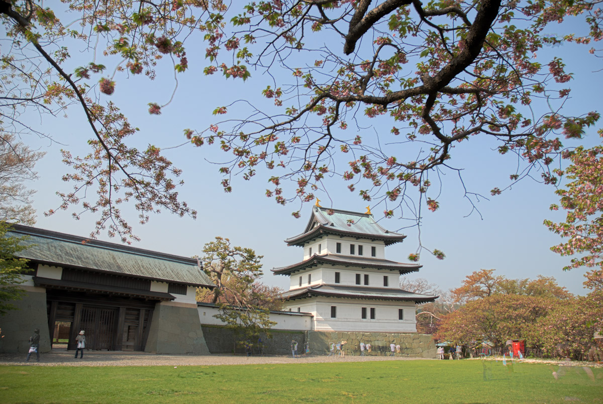 matsumae castle in spring